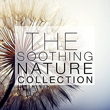 The Soothing Nature Collection