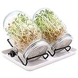 Barattolo Germogliatore In Vetro, Set di 2 Serra per germinazione di Semi, Broccoli Sprout Glass, Sprout Glass con 2 coperchi in acciaio inossidabile, 2 supporti antiscivolo, un vassoio grande