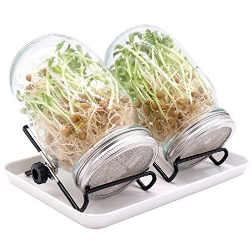 Y.A. LOTUS Germoir en Verre, Lot de 2 Sprout Jar 1000 ML, Brocoli Sprout Glass, Verre de Germination avec 2 couvercles en Acier Inoxydable, 2 Supports antidérapants, Un Grand Plateau
