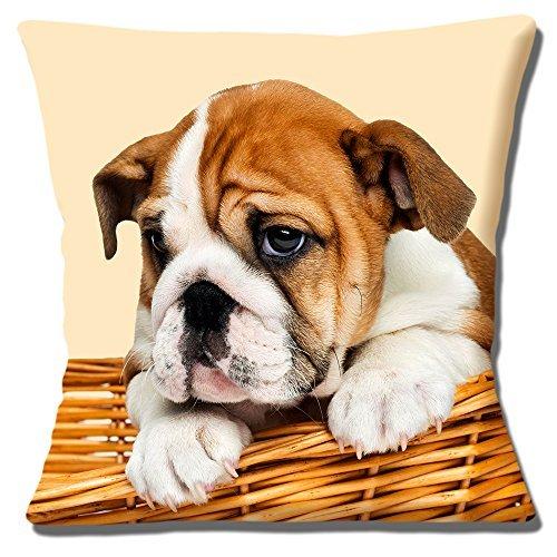Lindo Bulldog Inglés Cachorro Funda De Cojín 16 pulgadas 40cm CACHORRO EN CESTO