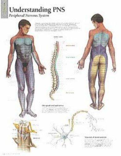 Scientific Publishing: Dermatones Paper Poster