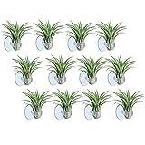 Air Plante Holder, Lot de 12Petite Plante Support Support à Nourriture avec Ventouse pour Suspendre Tillandsia Air Plantes Plantes d'intérieur sur Verre Home Decor Display (Plantes Non Inclus)