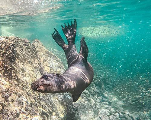 BVCK Pescado De Mar Rompecabezas para Adultos Rompecabezas Clásico 1000 Piezas