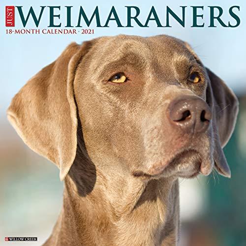 Just Weimaraners 2021 Wall Calendar (Dog Breed Calendar)