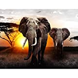 Runa Art Fototapete Afrika Elefant Sonnenuntergang Modern Vlies Wohnzimmer Schlafzimmer Flur - made in Germany - Grau Orange 9236010a