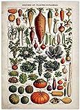 Vintage verduras frutas setas cartel lienzo impresión arte de pared antiguo cartel de ciencia botánica cocina pared arte decoración del hogar 40x60cm