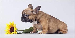 NR Puppy Sunflower Dog Bulldog francés Carteles e Impresiones Animal Painting Minimalin Scandinavian Nordic Wall Imagen para Sala de Estar 50x100cmx1 sin Marco