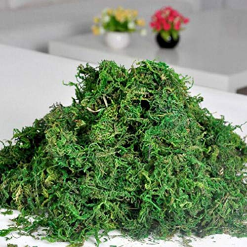 IMIKEYA 1 Sacchetto di lichene di Muschio Artificiale Muschio conservato Simulazione Piante Verdi Finto lichene Finto Muschio per la Decorazione del Giardino Patio 20g