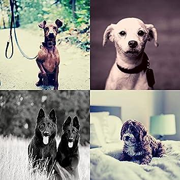 Собаки - Впечатление