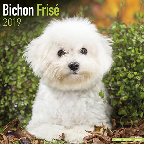 Bichon Frise Calendar 2019
