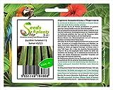 Pezzi - 4x Zucchina Partenon F1 Semi Ortaggi Seme Giardino Frisch Semi Novità KS215 - Seeds Plants Shop Samenbank Pfullingen Patrik Ipsa