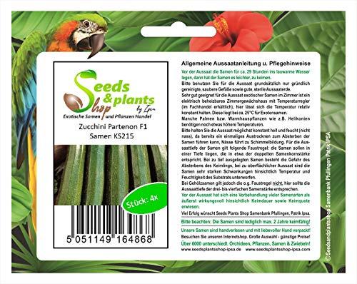 Stk - 4x Zucchini Partenon F1 Gemüsesamen Samen Garten Frisch Saatgut Neuheit KS215 - Seeds Plants Shop Samenbank Pfullingen Patrik Ipsa