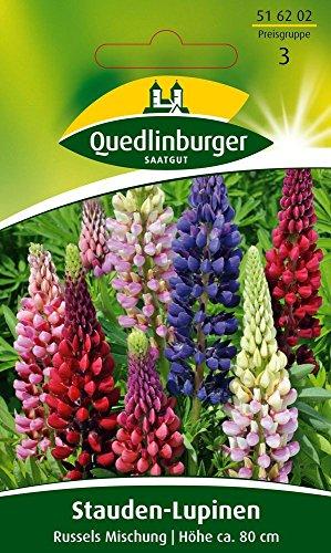 Gründünger - Stauden-Lupine Russels Hybrid-Mischung von Quedlinburger Saatgut