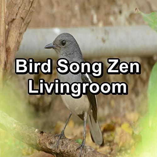 Sounds and Birds Song, Relax Bird Sounds & Calming Bird Sounds