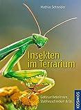 Insekten im Terrarium: Gottesanbeterinnen, Stabheuschrecken & Co. - Mathias Schneider