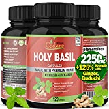 Organic Holy Basil Powder Capsules 2250mg with Ginger, Guduchi Extract | Anti Anxiety Stress Relief Supplements | Immune System Support Herbal | Vegan Gluten Free India Tulsi Energy Booster,120 Caps