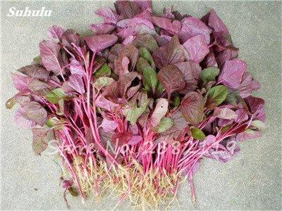 Herb Amaranthus Tricolor Seeds 50 Pcs graminée Semente non Ogm végétale comestible Bonsai Plante en pot sain sucré 14