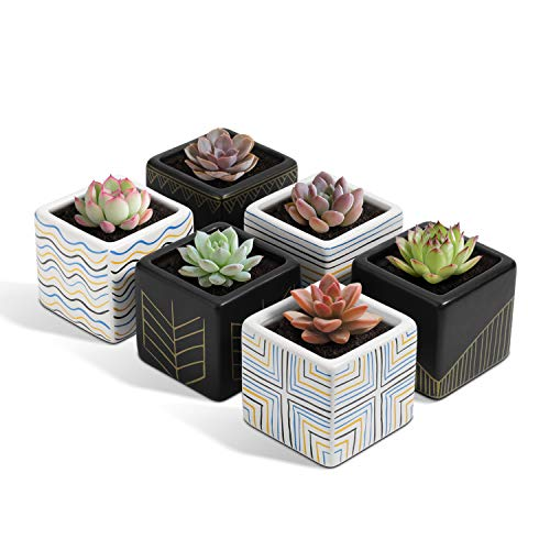 T4U 3 Inch Ceramic Succulent Pot Set of 6, Line Design Small Cactus Planter Geometric Bonsai Container, Modern Square Holder with Drainage Hole for Aloe Herb Plant Home Office Decoration Gift