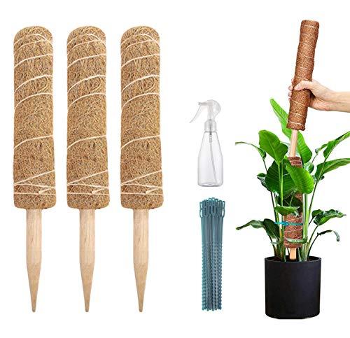Pflanzstab Kokos (3 Stück 40cm) verlängerbar natürlicher Kokosfaser Pflanzenhalter Für Haus Garten Kletterpflanze Erweiterung Der Pflanzenstütze
