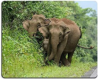 Natural Rubber Gaming Mouse pad Mouse mat Beautiful Family of Asian Elephant Elephas Maximus at Khao Yai National Park Tha...