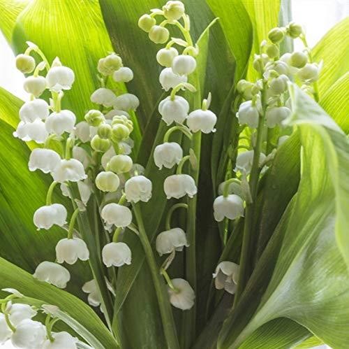 Meilleures plantes en pot/fleurs dembellissement de jardin -