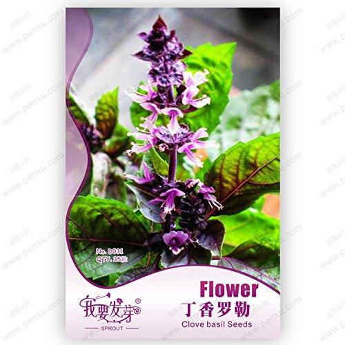 Hot vente 20 pcs graines de sakura japonais cerise oriental graines de fleurs des plantes Bonsai pour la maison et le jardin