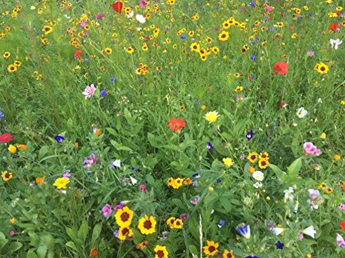 Veitshöchheimer Bienenweide Sommerblumenmischung Rot–/Gelbtöne - Bienenwiese Blumenwiese für ca. 75-100 m², ca 100 Gramm