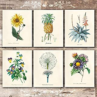 Vintage Botanical Prints Wall Art Prints (Set of 6) - Unframed - 8x10s