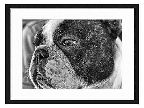 Wood Framed Canvas Artwork Home Decore Wall Art (Black White 20x14 inch) - French Bulldog Dog Pet Tender Look Friend