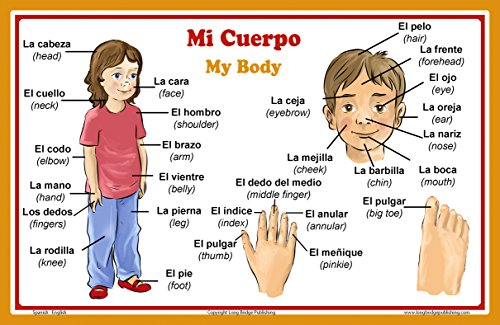 Long Bridge Publishing Spanish Language School Poster - Words About Parts of The Body - Wall Chart for Home and Classroom - Bilingual: Spanish and English Text