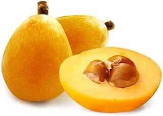 Taloyer 20PCS Loquat Seeds Sweet Delicious Bonsai Fruit Seeds