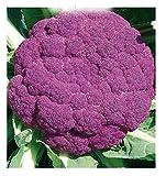 Inception Pro Infinite 4400 C.ca Semi Cavolfiore Violetto di Sicilia Medio Precoce - Brassica Oleracea - In Confezione Originale - Prodotto in Italia - Cavolfiori - CF003