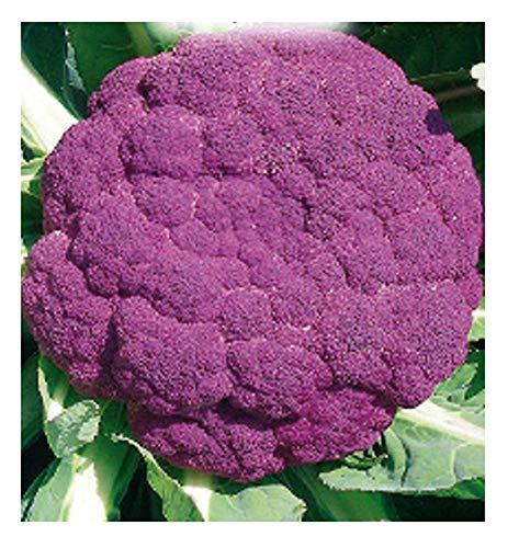 4400 C.ca Graines de chou-fleur - Violette sicilienne précoce moyenne - Brassica Oleracea - Dans l'emballage d'origine - Fabriqué en Italie - Chou-fleur - CF003