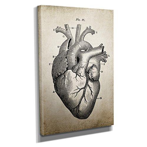 Nerdinger Vintage Heart Anatomy - Kunstdruck auf Leinwand (60x90 cm) zum Verschönern Ihrer Wohnung. Verschiedene Formate auf Echtholzrahmen. Höchste Qualität.