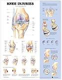 Knee Injuries Anatomical Chart - Anatomical Chart Company
