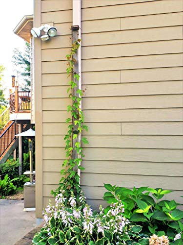 A Sleek, Narrow and Unobtrusive 9 Foot Tall Downspout Trellis to Make Your Gutter/Downspout Disappear (2 Trellises)