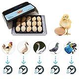 Uso domestico Incubatrice da 15 uova Controllo automatico della temperatura Cova digitale delle uova Controllo automatico della temperatura Hatcher per polli, anatre, uccelli
