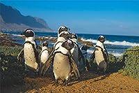 DIY-5dダイヤモンド塗装キット,フルラウンドドリル、ペンギンの動物と風景40x60cm、DIYラインストーン刺繡クロスステッチダイヤモンドアートクラフトの家の壁の装飾