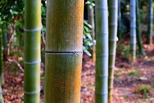 Puzzle 1000 Piezas, Bosque De Bambú Puzzles Souvenir Regalo Para Adolescentes Y Adultos, Ejercicio De Memoria Juego Aliviar El Estrés, Juego De Desafío