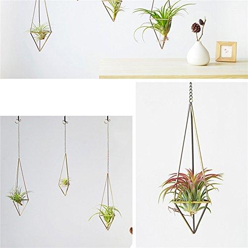 Sundlight Pflanzen-Halter Himmeli, für Tillandsia-Pflanzen (mit Ketten), 2er-Pack, M: 25*7.5cm