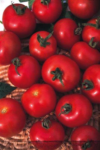 JustSeed - graines de Legumes Graines de tomate Money Maker 100 Economy Lot