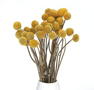 Best craspedia flower arrangement Reviews