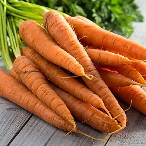 Tendersweet Carrot Seeds - 100 Count Seed Pack - Non-GMO - Rich-Orange Colored Roots are coreless, Crisp and Very Sweet. Perfect for Canning, juicing, or Eating raw. - Country Creek LLC