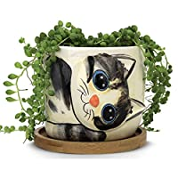 Cute planter with kitty drawn on it and a succulent growing in it
