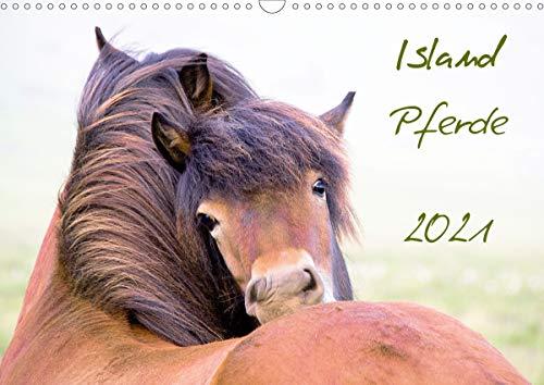 Islandpferde (Wandkalender 2021 DIN A3 quer)