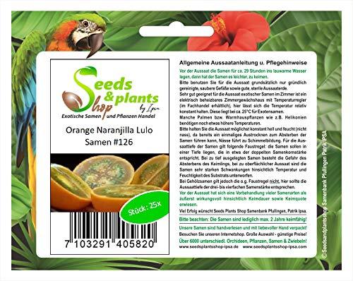 Stk - 25x Orange Naranjilla Lulo Obst Pflanzen - Samen #126 - Seeds Plants Shop Samenbank Pfullingen Patrik Ipsa
