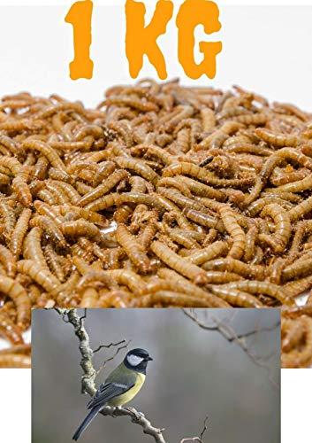 Mehlwürmer lebend 1000g in Box mit Eierkarton | 1kg lebendige Mehlwürmer für Vögel | Wildvogelfutter Mehlwürmer Lebendfutter Reptilien | lebende Mehlwürmer kaufen Würmer lebend