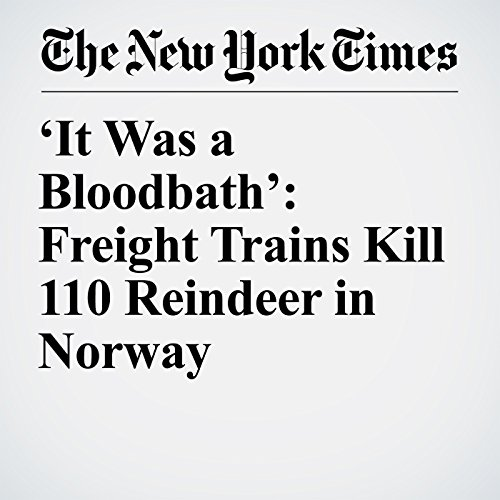 'It Was a Bloodbath': Freight Trains Kill 110 Reindeer in Norway copertina