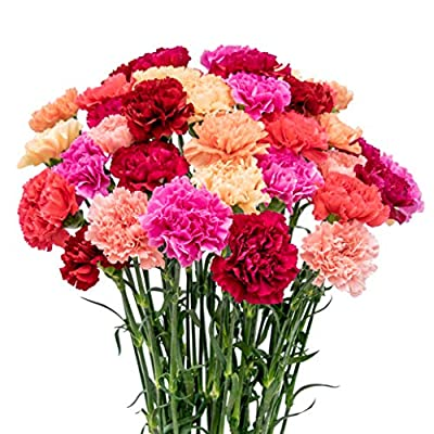 FlowerPrime 50 Mother's Day Carnations - Special Holiday Variety Pack Fresh Natural Cut Flowers from Flower Prime