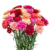 FlowerPrime 50 Mother's Day Carnations - Special Holiday Variety Pack Fresh Natural Cut Flowers
